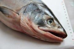 La testa del salmone fresco con gli occhi ed apre la bocca Fotografie Stock Libere da Diritti