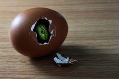La testa del serpente nell'uovo di breoken Fotografia Stock Libera da Diritti