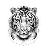 La testa della grafica vettoriale bianca di schizzo della tigre Fotografia Stock