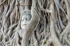 La testa di Buddha è inclusa nelle radici dell'albero, un bello antico Fotografie Stock Libere da Diritti