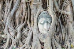 La testa di Buddha è inclusa nelle radici dell'albero, un bello antico Immagini Stock Libere da Diritti