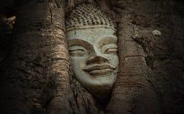 LA TESTA DI BUDDHA a Ayutthaya immagine stock libera da diritti