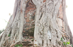 La testa di Buddha in Wat Na Pra Meru. Fotografie Stock Libere da Diritti