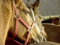 La testa di un cavallo al tramonto in autunno Immagine Stock Libera da Diritti