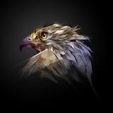 La testa di un falco su un fondo nero Immagini Stock