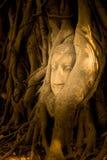 La testa di una statua di Buddha dell'arenaria si è accoccolata nelle radici dell'albero accanto alle cappelle secondarie di Wat  Fotografia Stock