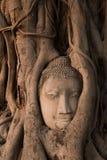 La testa famosa della statua di Buddha nell'albero si pianta a Wat Mahath Immagini Stock Libere da Diritti