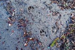 La textura abstracta de la arena en la orilla del lago dispersó colo foto de archivo
