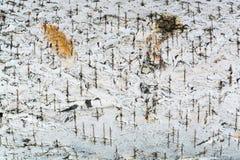 La textura blanca de la corteza de abedul Fotos de archivo libres de regalías