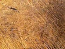 La textura cortó los anillos de árbol de madera fotografía de archivo