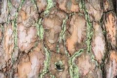 La textura de la corteza Imagen de fondo travieso Foto de archivo libre de regalías