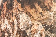 La textura de la corteza de árbol Fotos de archivo libres de regalías