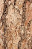 La textura de la corteza del pino Fotos de archivo libres de regalías