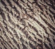 La textura de la madera La corteza del abedul viejo Fotografía de archivo libre de regalías