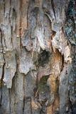 La textura de la madera para el fondo fotografía de archivo libre de regalías