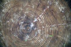 La textura de la madera para el fondo Imagen de archivo libre de regalías