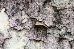La textura de la pared con el musgo y yeso y lechada de cal agrietados Foto de archivo