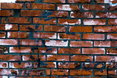 La textura de la pared de ladrillo áspera Manchas azules y pintura blanca Fotos de archivo libres de regalías