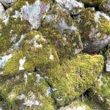 La textura de la pared de piedra vieja cubrió el musgo verde imagen de archivo