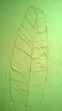 La textura de la pared del verde de la hoja del plátano Foto de archivo