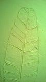 La textura de la pared del verde de la hoja del plátano Fotos de archivo libres de regalías