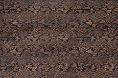 La textura de la piel de serpiente Imagen de archivo libre de regalías