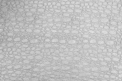 La textura de la piel ligera del cocodrilo Fotografía de archivo
