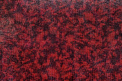 La textura de la piel púrpura del cocodrilo Imagen de archivo