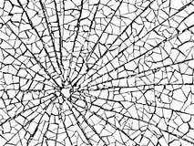 La textura de las grietas blanca y negra Fondo del vector Tierra agrietada fotografía de archivo