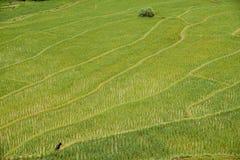 La textura de las terrazas del arroz coloca en Tailandia septentrional Fotografía de archivo