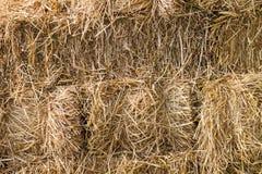 La textura de los detalles de la paja del arroz como fondo Fotografía de archivo libre de regalías