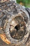 La textura de madera Foto de archivo libre de regalías