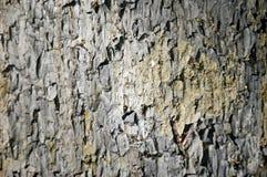 La textura de madera Imágenes de archivo libres de regalías