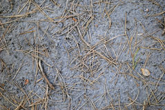 La textura de madera Imagen de archivo libre de regalías