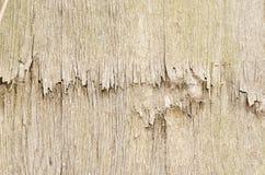 La textura de madera, beige ligero Foto de archivo libre de regalías