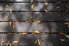 La textura de madera de la trayectoria Fotografía de archivo libre de regalías