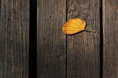La textura de madera del marrón oscuro del fondo y la vieja deja otoño Foto de archivo