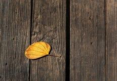 La textura de madera del marrón oscuro del fondo y la vieja deja otoño Fotografía de archivo