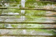 La textura de la pared enselvada vieja de los registros lanzados por el musgo verde, una cerca de tableros putrefactos horizontal Foto de archivo