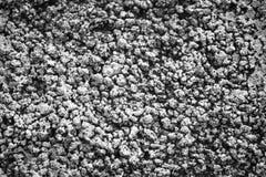 La textura de la piedra caliza y de la cal fotografía de archivo libre de regalías
