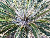 La textura de un arbusto de una avefría mullida con verde vibrante apacible natural fresco hermoso talló diversas hojas únicas de imagen de archivo