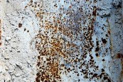 La textura de un viejo blanco aherrumbró hoja del hierro del metal Fondo detallado del moho Imagen de archivo libre de regalías