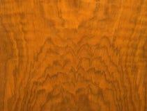 La textura del árbol Foto de archivo libre de regalías