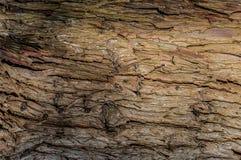 La textura del árbol Imagen de archivo