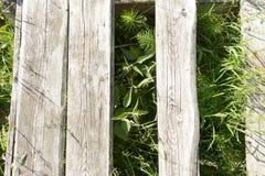 La textura del árbol en la hierba Fotografía de archivo