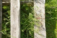 La textura del árbol en la hierba Imagen de archivo libre de regalías