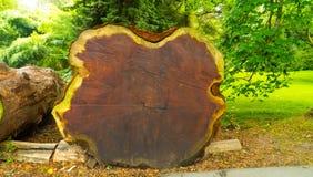 La textura del árbol está en una sección Imágenes de archivo libres de regalías
