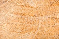 La textura del árbol Un árbol ligero en una sección La textura del pino Madera del fondo de un árbol Fotos de archivo libres de regalías