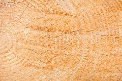 La textura del árbol Un árbol ligero en una sección La textura del pino Madera del fondo de un árbol Fotografía de archivo libre de regalías