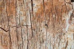 La textura del abedul de la corteza de árbol sin la corteza Fotografía de archivo libre de regalías
